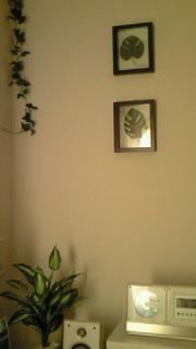 *GREENな部屋♪*